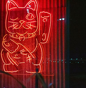 cat-close-up-colors-2256259_edited.jpg