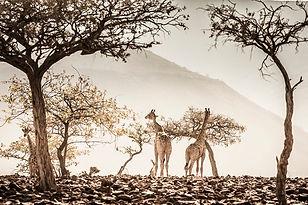 טיול צילום - נמיביה
