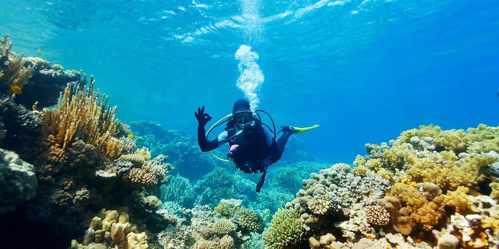 潛行世界 | 【潛水初班】PADI開放水域潛水員課程