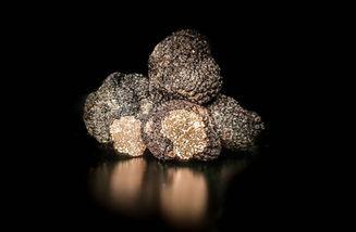 La truffe melano
