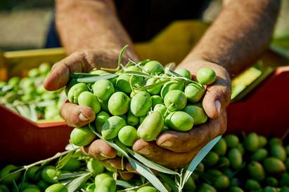 Pressé d'olives vertes