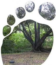 34_eco-footprint.jpg