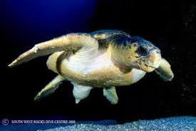 SWR Turtle2.jpg