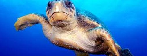SWR Turtle.jpg