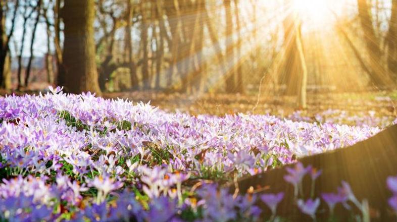 wiosna.jpg