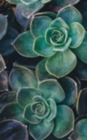 succulents 2.png