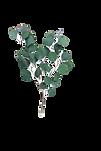 Eucalyptus%20Leaves_edited.png