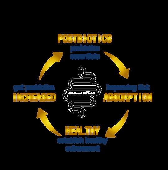 positive loop_en.png