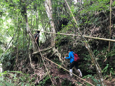 Trekking in the Jungles of Khao Yai National Park in Thailand