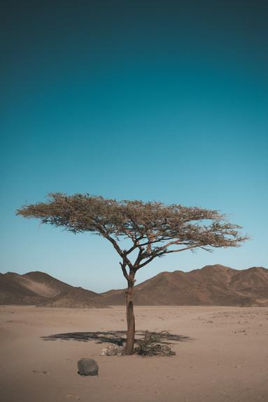 beautiful tree in Africa desert
