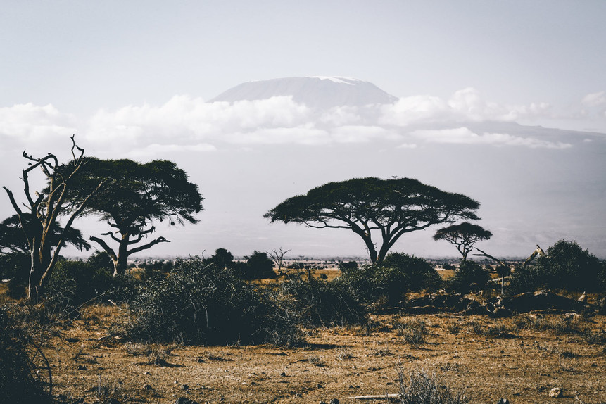 safari view of trees and mountains in Africa