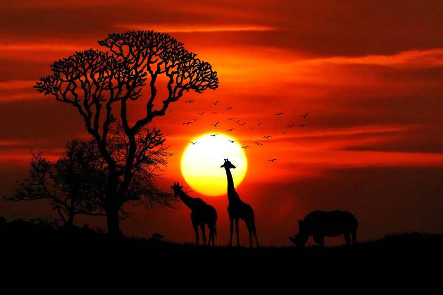 African giraffes and rhino with the sunset in the background