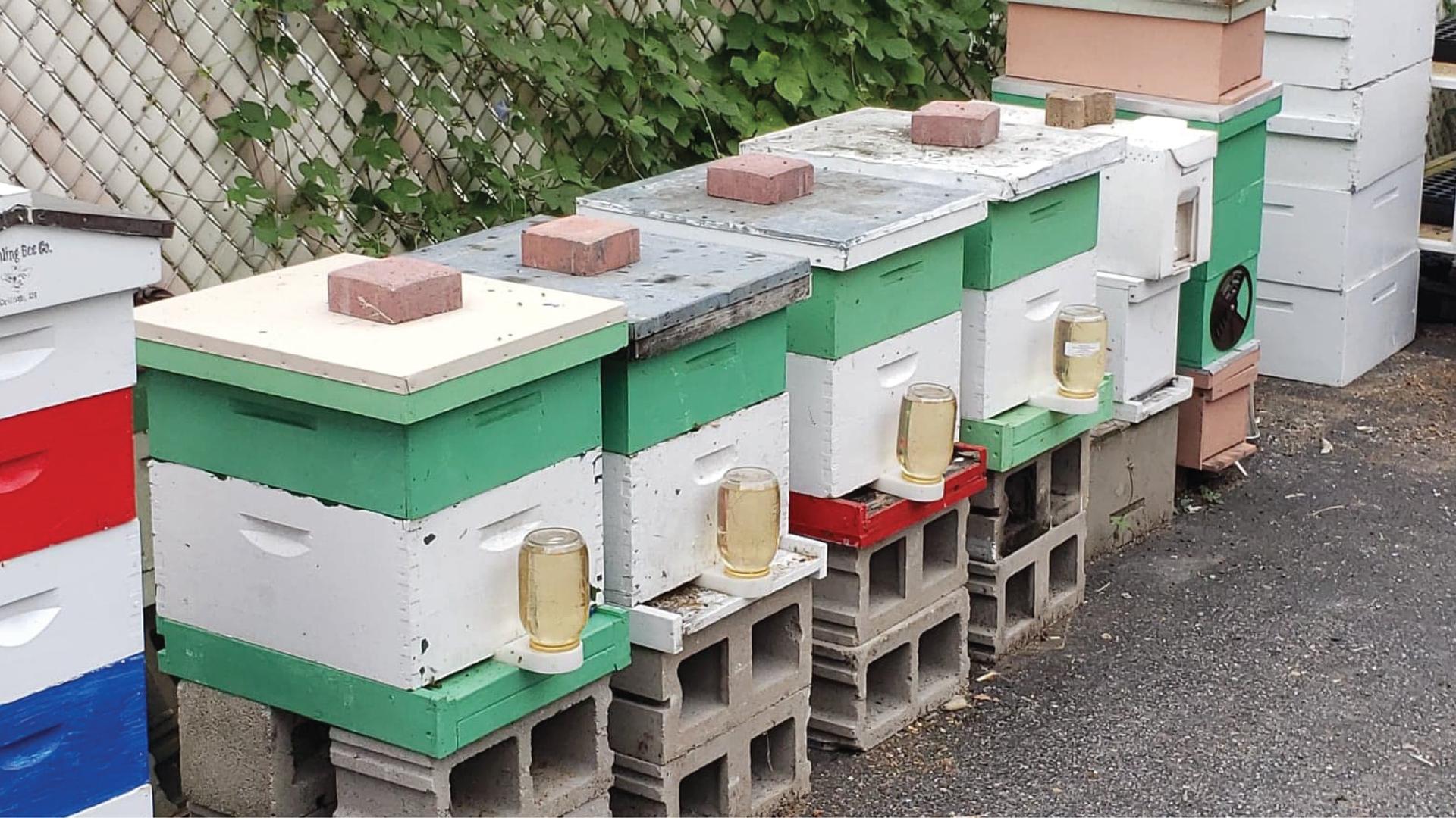 backyard hives 1.png
