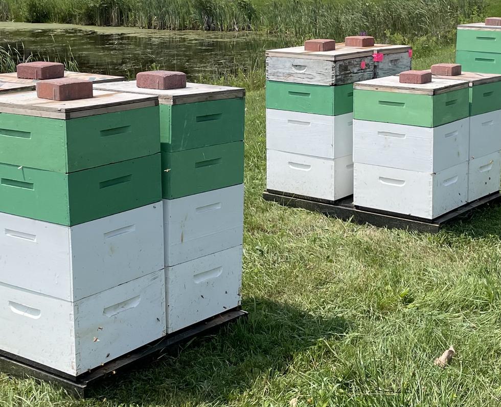 Zandstras Highland Hives.png