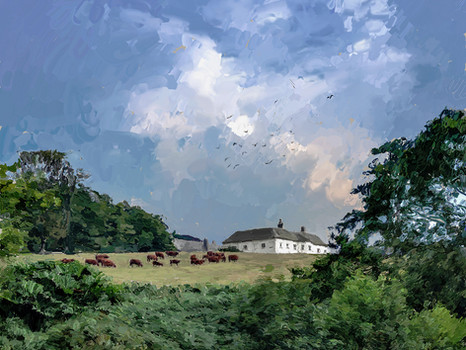 Cornish cows and house. 2019