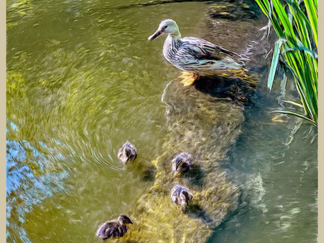 Family line up, Wandsworth Common Pond.  2020