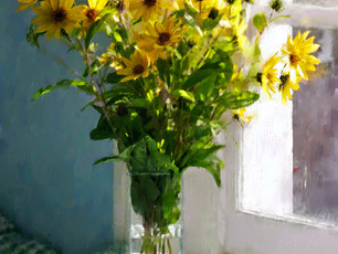 Yellow daisies in morning light