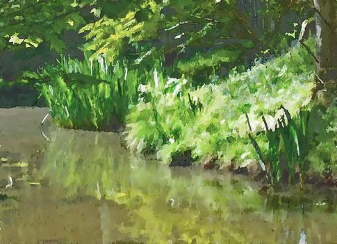 Sunlit pond, Sussex. 2020