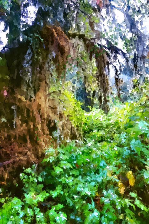 Ketchikan rain forest, Alaska. 2019