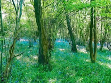 Bluebell wood, Sussex. 2020.