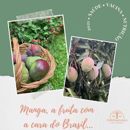 Manga: a fruta com a cara do Brasil