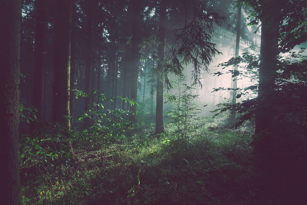 Dante's forest, and allegory for a mid-life crisis