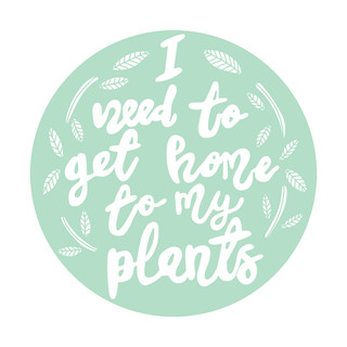 Home To My Plants