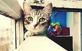 6779433-cat-close-up.jpg