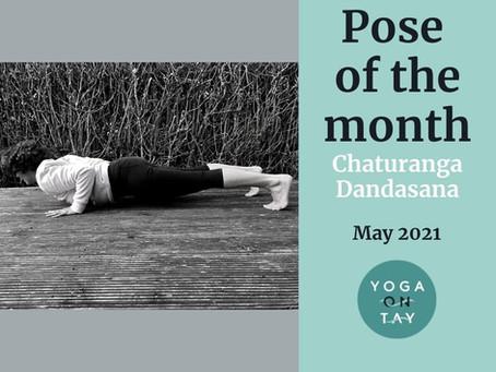 Chaturanga Dandasana Pose of the Month