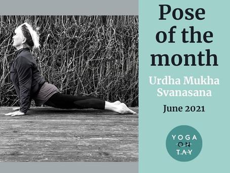 Urdhva Mukha Svanasana Pose of the Month