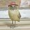 Thumbnail: Mr & Mrs Owl