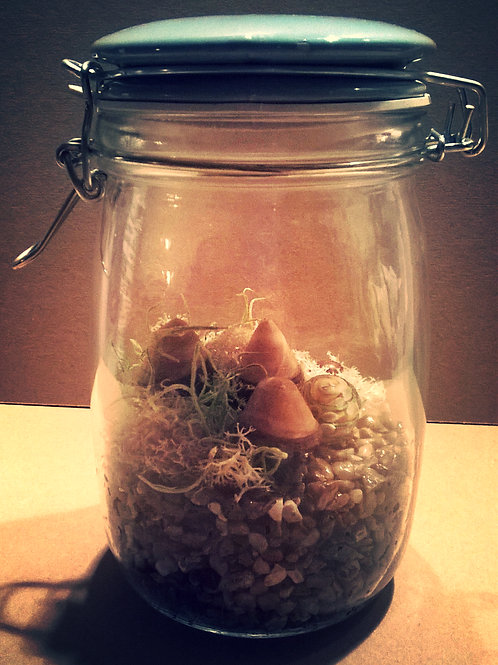 'Enchanted Terrarium' Jar  - Fairy Garden
