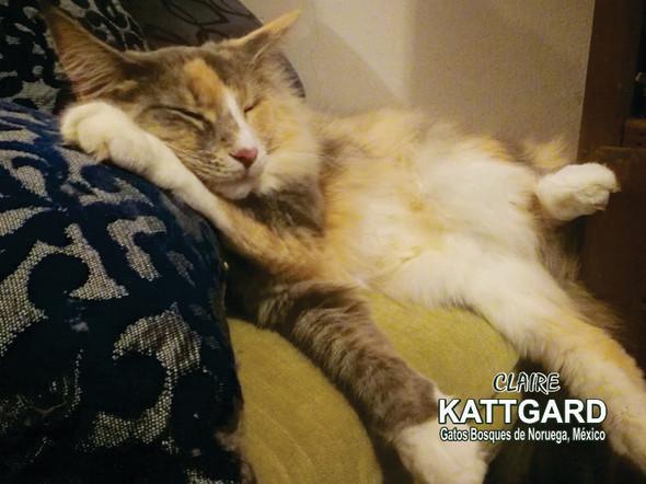 kattgard6_claire.jpg