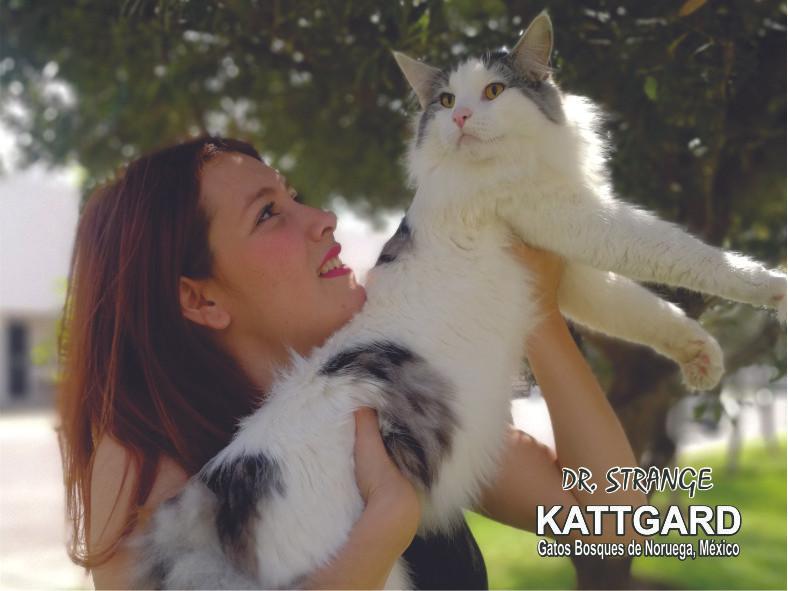 kattgard9_drstrange.jpg