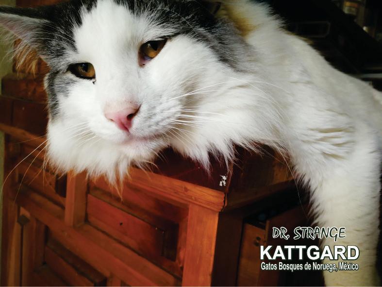 kattgard12_drstrange.jpg