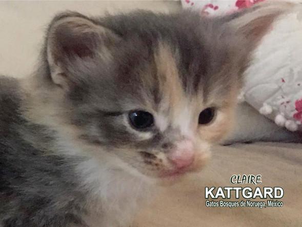 kattgard2_claire.jpg