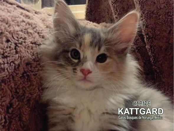kattgard5_claire.jpg
