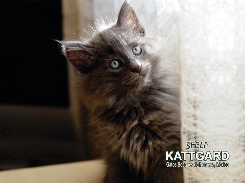 kattgard5_sfela.jpg
