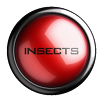 Insects Eliminator Pest Control Swansea