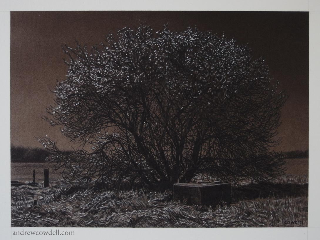 Dark Paintings by Andrew Cowdell. Tree in blossom under the light of a full moon.