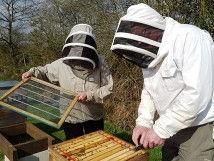 Beekeeping e