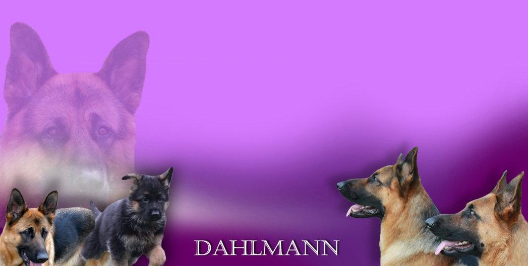 DAHLMANN FOOTER