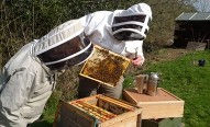 Beekeeping a