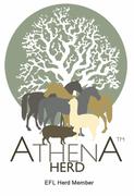 Athena Herd