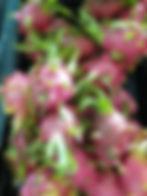Dragon Fruit Selected.jpg