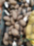 Potato Revised.jpg