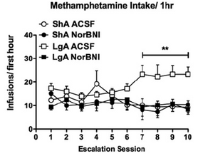 New paper published: Finding new ways to treat methamphetamine dependence.