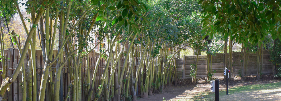 Forest View Garden.jpg