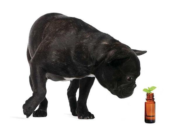 essential oils.jpg