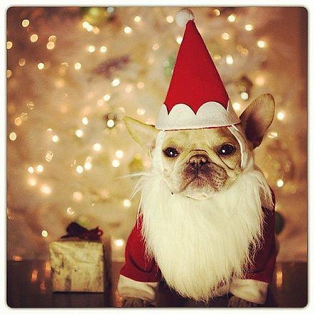 dog holiday.jpg